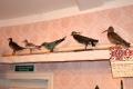 elets_bunin_museum_zal_7_003